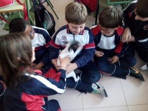 mascotas 04