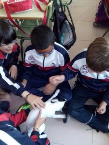 mascotas 05