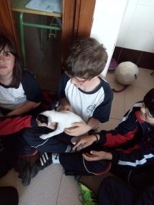 mascotas 07