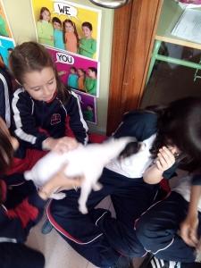 mascotas 08