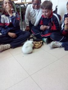 mascotas 38