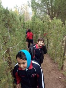 Bosque encantado11-2014 04