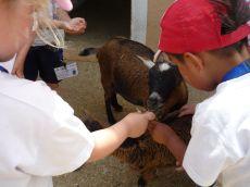 granja escuela 10