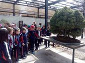 Museo bonsay 02