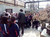 Museo bonsay 03