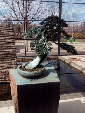 Museo bonsay 04
