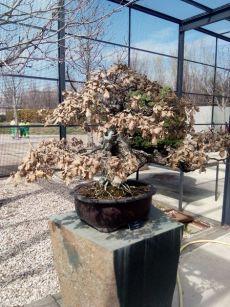 Museo bonsay 05